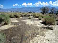 After the flood, silt now covers some of the World War II-era latrine foundations at Manzanar National Historic Site.